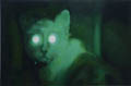 Green Night: Cat